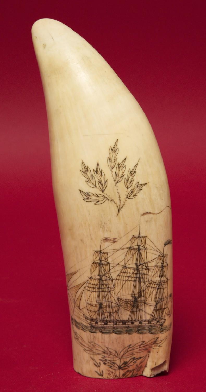 Scrimshaw Large Fine Quot Fanny Campbell Quot Scrimshaw Whale