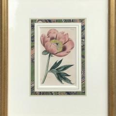 Botanical Prints 1_2820