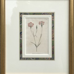 Group of 10 Hand Colored Botanical Engravings