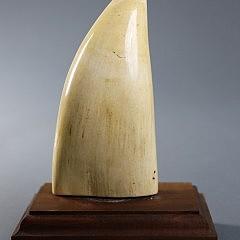 Fine Whaleman Scrimshawed Sperm Whale Tooth