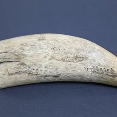 Pair of Whaleman Scrimshawed Whale Teeth
